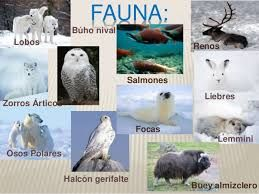 Resultado De Imagen Para Fauna De La Tundra Dibujos Animados Kawaii Biomas Fauna