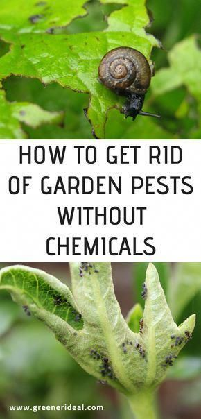 The Chemicals In The Fertilizers Utilized In Standard Gardens Really Break Down The Organic Gardening Pest Control Organic Vegetable Garden Garden Pest Control