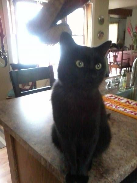 Lost Cat Mukwonago Wisconsin Wi United States L40161 With