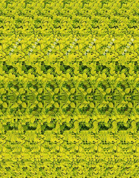 3D PHOTOGRAPH----giraffe CAN YOU SEE IT?