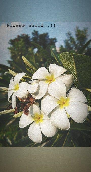 Plumeria Plumeria Mobile Photography Photography
