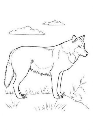 Wolf Ausmalbilder 1 Ausmalbilder Ausmalen Malvorlagen Tiere