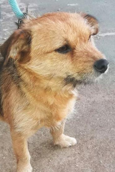 Hund K A Mischling Hundin 2 Jahre Spanien Africa Tolle Maus Sucht Tierschutz Hunde Hunde Tiere