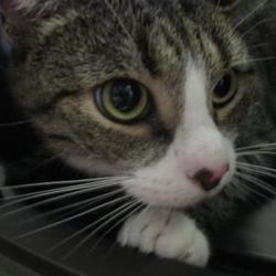 Pet Card Pets Pet Adoption Animal Rescue