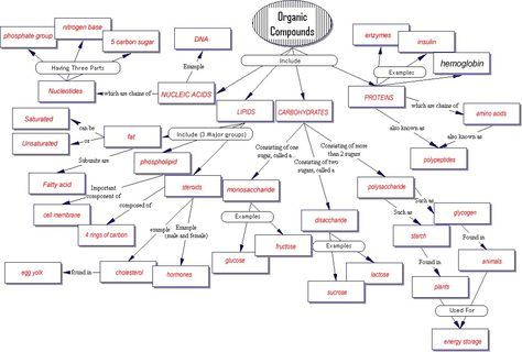 Concept Map Organic Compounds biologically important organic molecules   Original Document