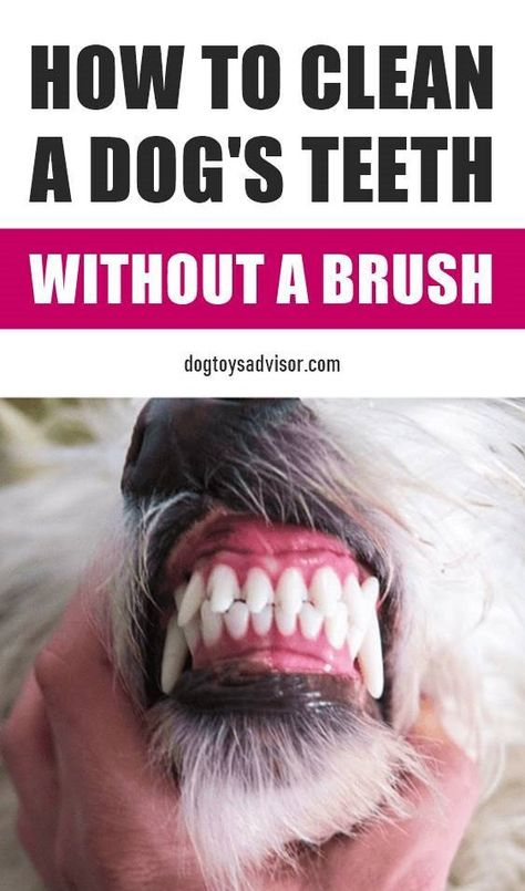 Dental care is so important for our dogs. Yes, you need to clean your dog's teeth but you can do it at home without brushing. Dental care is so important for our dogs. Yes, you need to clean your dog's teeth but you can do it at home without brushing. Dog Health Tips, Pet Health, Dog Care Tips, Pet Care, Dog Dental Care, Dog Smells, Golden Retriever, Teeth Cleaning, Cleaning Tips