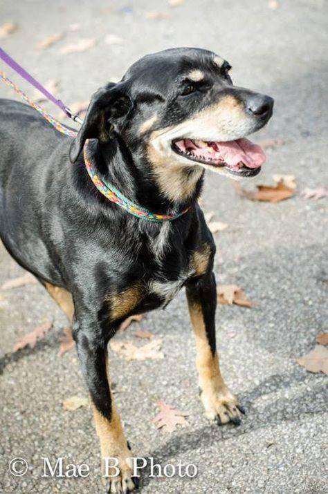 Adopt 928 Shirley 10 Rescued On Adoptable Pets Dog