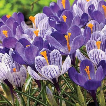 18+ When to plant bulbs in michigan ideas