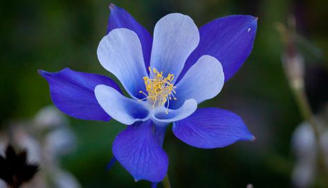 33 Ideas De Solo Flores Flores Exóticas Flores Flores Exoticas Del Mundo
