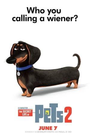 The Secret Life Of Pets 2 Hela Filmen Pa Natet Svensk Hd Secret