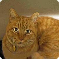 Adopt A Pet Rodney Denver Co Great Cat Cat Adoption
