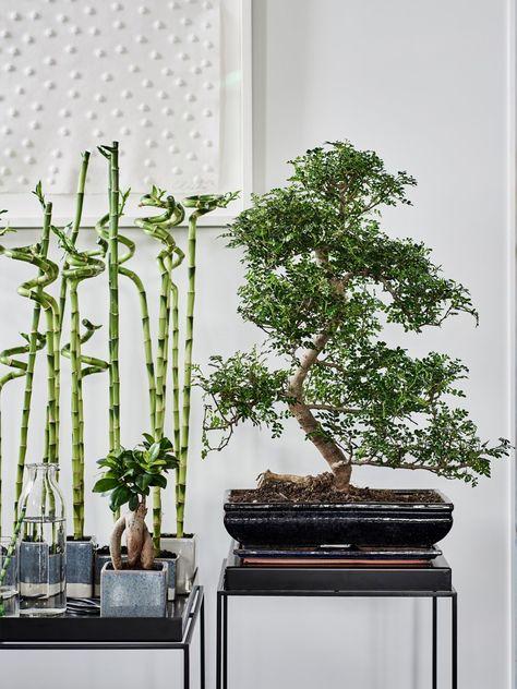 Ab Ins Grune Deko Ideen Mit Zimmerpflanzen Beautiful Living