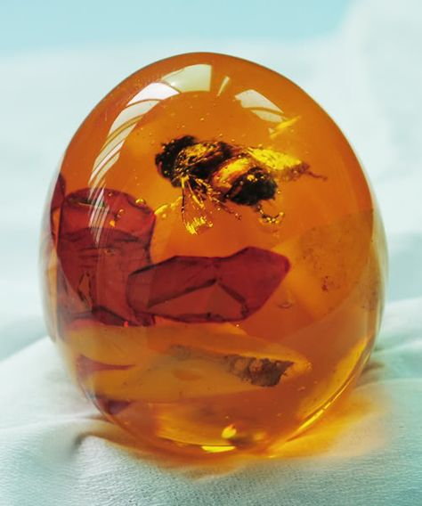 Bumble Bee in Amber ❦ CRYSTALS ❦ semi precious stones ❦ Kristall  ❦ Minerals ❦   Cristales ❦