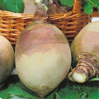 Swede Marian Seeds 1 95 From Mr Fothergills Seeds Seeds Vegetable Seed Mr