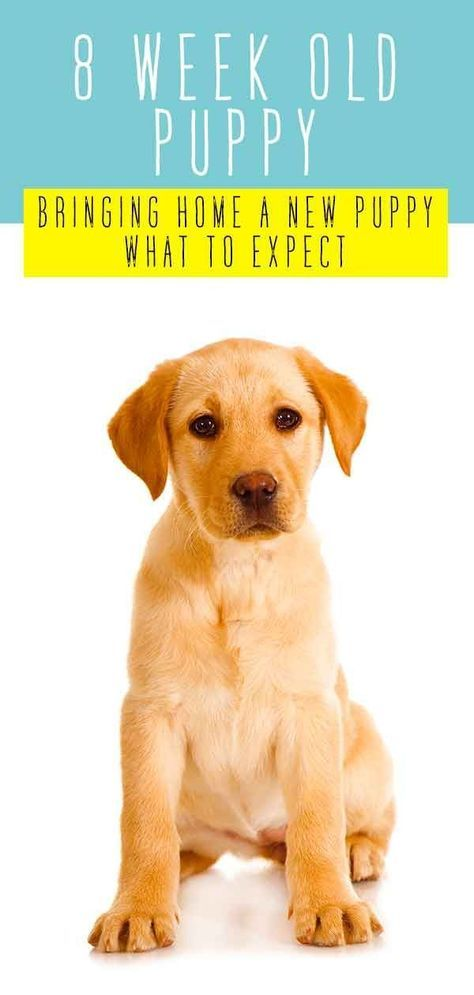 9 Insider Tips That Every New Dog Owner Should Know In 2020 Puppy Training House Training Puppies Puppy Obedience Training