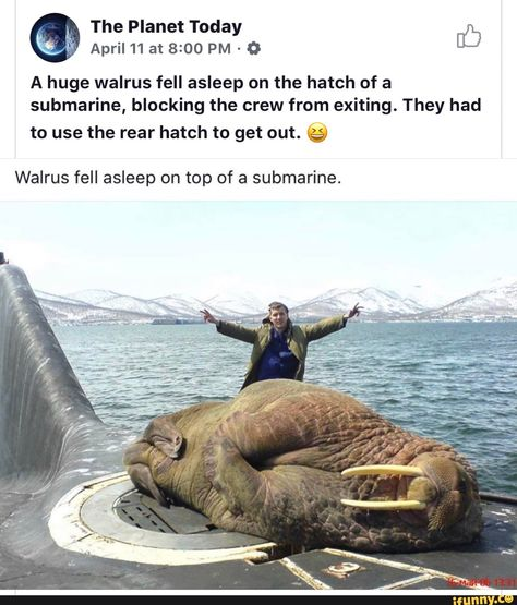 A huge walrus fell asleep on the hatch of a submarine, blocking the crew from exiting. They had to use the rear hatch to get out.
