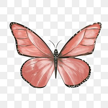 Butterfly Clipart Beautiful Butterfly Insect Butterfly Illustration Red Colored Butterfly Black In 2021 Butterfly Clip Art Butterfly Decorations Butterfly Illustration