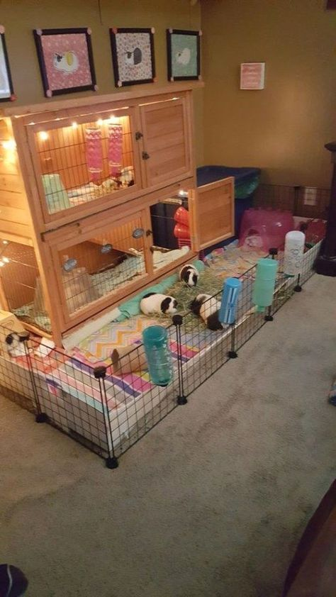 trendy ideas for pet bunny diy cage guinea pigs Diy Guinea Pig Cage, Guinea Pig Hutch, Guinea Pig House, Cages For Guinea Pigs, Diy Guinea Pig Toys, Guinea Pig Costumes, Bunny Hutch, Hamster Toys, Hamster Cages