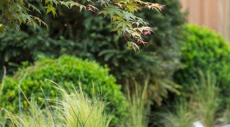 villa sassi - Torino - dettaglio verde stipa aceri bossi e tassi - Giardino Segreto di Cristiana Ruspa - Foto di Dario Fusaro