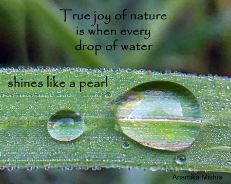 Nature Quote About A Drop Of Water Nature Quotes Mother Nature Quotes Nature Quotes Inspirational