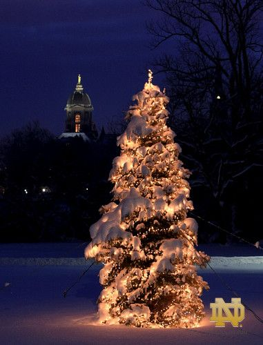 Main building and a wintry Christmas tree