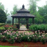 Georgia S Camellia Trail