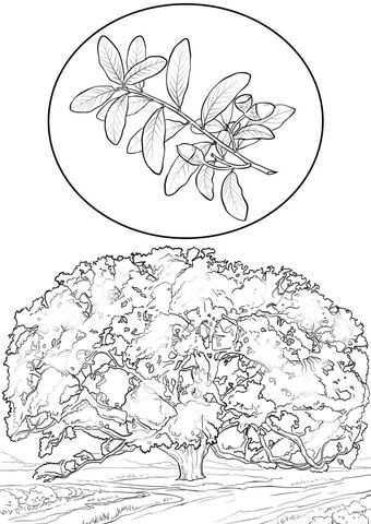 Southern Live Oak Coloring Page Tree Coloring Page Bird Coloring Pages Coloring Pages