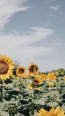 Van Gogh Lockscreen Tumblr In 2019 Sunflower Wallpaper