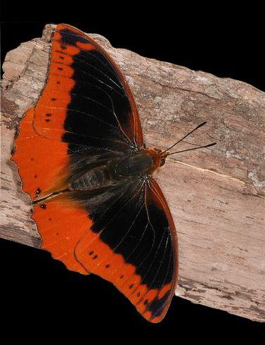 Pin Von Ilona L Auf Schmetterlinge U Motten Schone Schmetterlinge Schmetterling Bunte Vogel