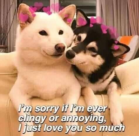 February 2nd Wholesome Dogs Cute Love Memes Love You Meme Wholesome Memes