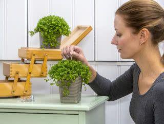 Uprawa Doniczkowych Paproci W Mieszkaniu Poradnik Pielegnacji I Opis Najpopularniejszych Gatunkow Zielony Ogrodek Plants