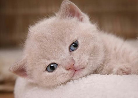 #animales #mascotas #pets #baby #bebes #lindos #cuttest #cute #beauty #beautyful #hermosos #bonitos #wwf #peta #adorables #cachorros #gatitos #gatos #divertidos #funny #funniest