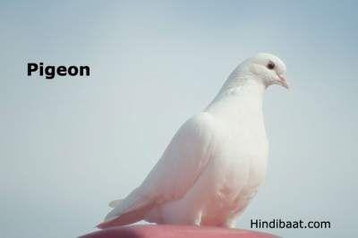 Birds Name In Hindi And English Pakshiyon Ke Naam Birds Good Morning Inspirational Quotes Hindi
