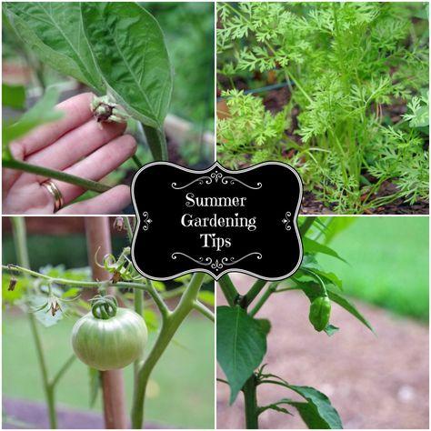 Summer Gardening Tips from @turningclockbac