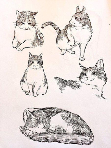 Bevsi Koshachya Mit Bildern Katze Zeichnen Skizzen Von Tieren