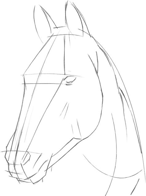 how to draw a horse head step by step Horse Head Drawing, Horse Drawings, Pencil Art Drawings, Art Drawings Sketches, Animal Drawings, Drawing Art, Simple Horse Drawing, Horse Drawing Tutorial, Horse Pencil Drawing