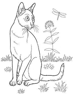 Ausmalbild Katze Auf Der Wiese Zum Ausmalen Ausmalbilder