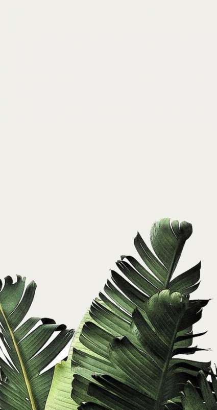 Foliage Plant Wallpaper Beautiful Nature Wallpaper Plant Background Wallpaper iphone aesthetic leaves