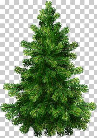 Pino Pino Verde Arbol De Navidad Ilustracion Png Clipart Tree Illustration Cartoon Christmas Tree Christmas Tree Branches