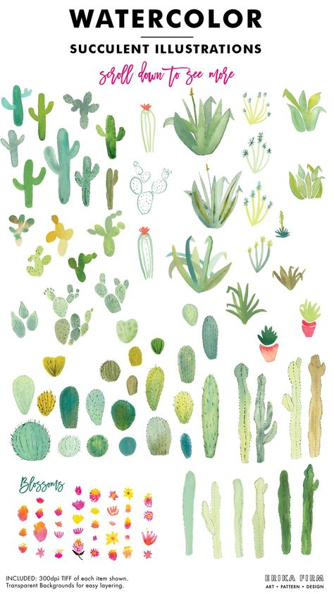 Cactus clipart by robertichka on @creativemarket