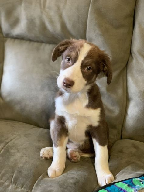 Adopt Regan On Dog Adoption Help Homeless Pets Homeless Pets