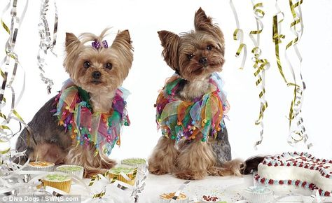How to make your dog a diva: Put it in a pram and paint its nails¿ City high flier quits job to set up designer dog boutique ¿ and publishes guide to pimping up your pooch   Mail Online