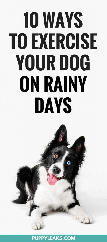 Being Stuck Indoors Can Make Exercising Your Dog A Challenge I Ve
