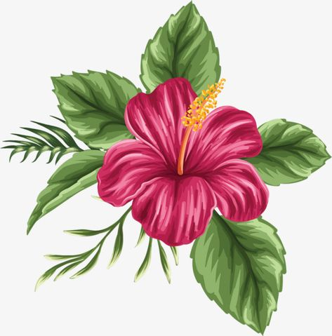 hand painted hibiscus flower, Hibiscus Flower, Flowers, Leaf PNG Image and Clipart