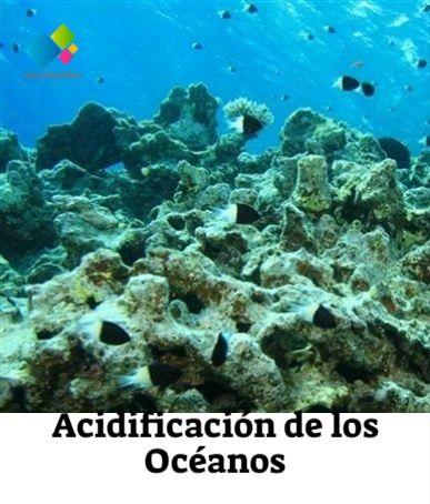 Acidificación De Los Océanos Acidificación Del Océano Fuentes De Energia Renovable Problema Ambiental