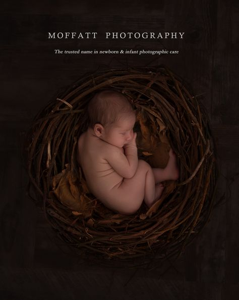 Ari, 10 days new, in our newborn nest. {Moffatt Photography}