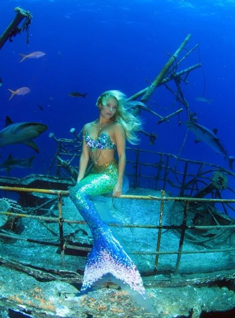 Hannah Mermaid (How cool is it to have Mermaid as your work-title?) swimming with sharks! :O