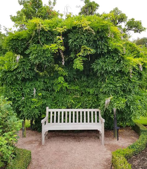 Gardendesign Books: A Lovely Spot, All Covered In Wisteria! And A Peaceful