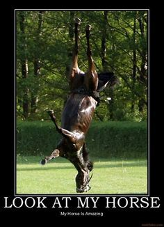 Funny Horse Pictures With Captions : funny, horse, pictures, captions, Funny, Horse, Captions, Ideas, Horse,, Horses,, Horses