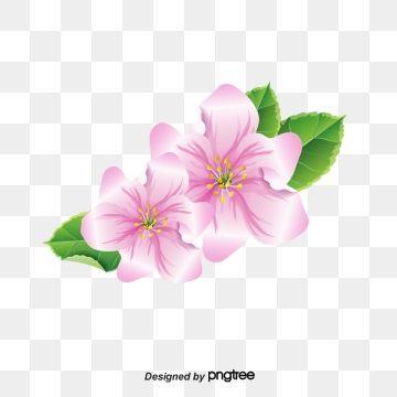 Jasmine Flowers Flower Element Flower Png Transparent Clipart Image And Psd File For Free Download Flower Png Images Beautiful Flower Designs Jasmine Flower